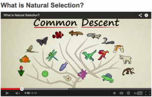 Stated Clearly offers another good overview of natural selection